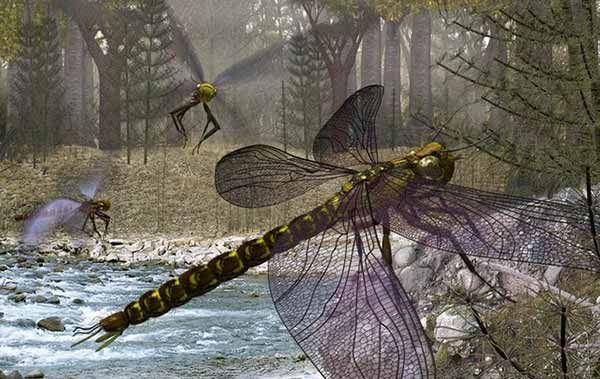 昆虫の起源、4億8000万年前と判明 従来より以前…13ヶ国チーム研究