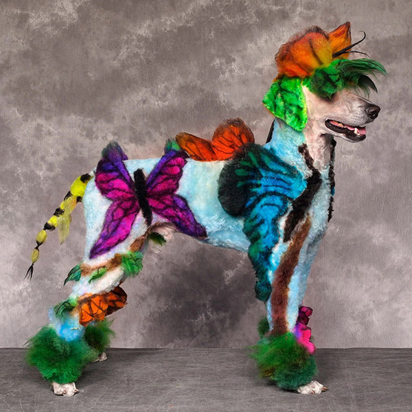 crazy-dog-grooming1