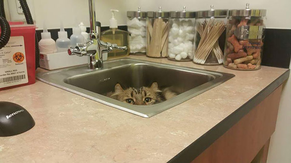 funny-scared-cats-vet-clinic-6-5bb629a5d03b7__605
