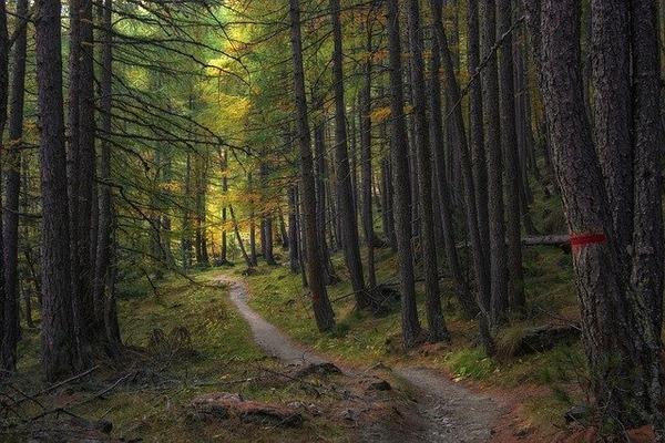 trail-5726987_640
