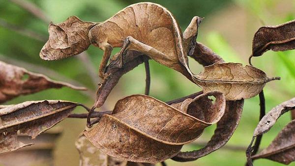 camouflaged-animals-02