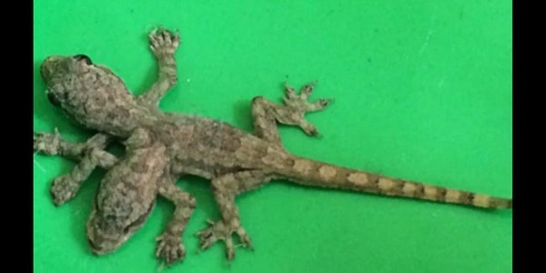 gecko-freestyle-list-photo-u2