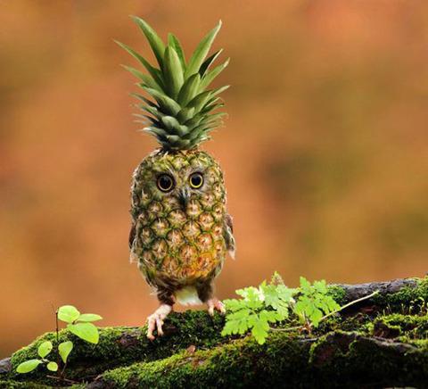 The Pinehootle