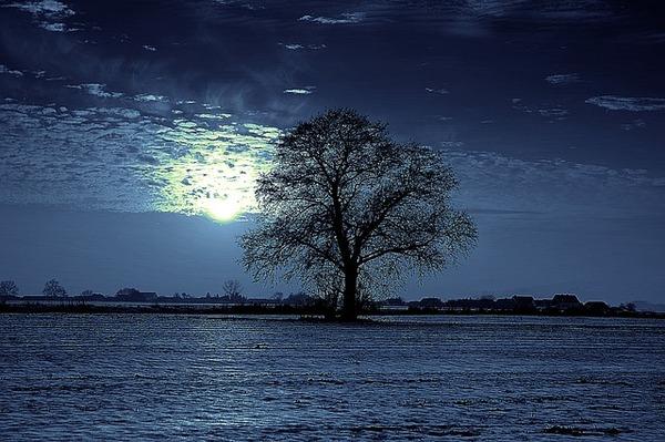 tree-2067084_640