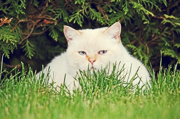 cat-2138179_640