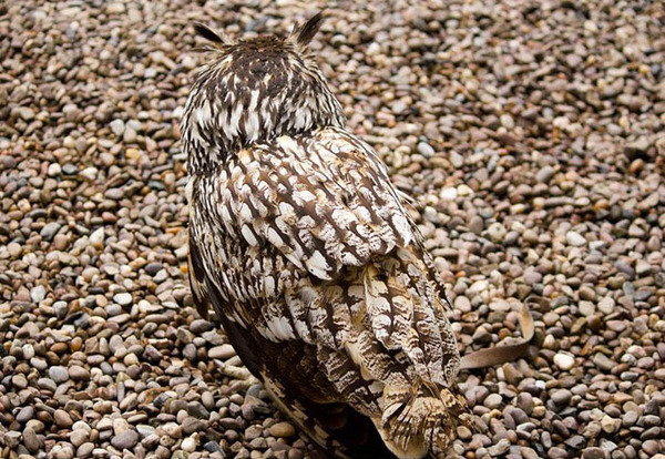 camouflaged-animals-57