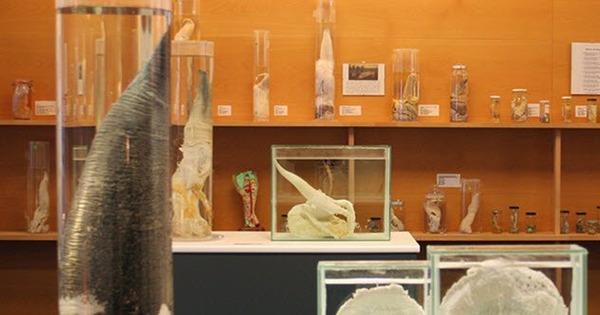 9-Icelandic-Phallological-Museum
