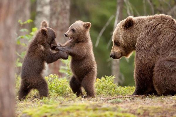 俺が昔山で遭難した時に熊に助けられた話をしたい。
