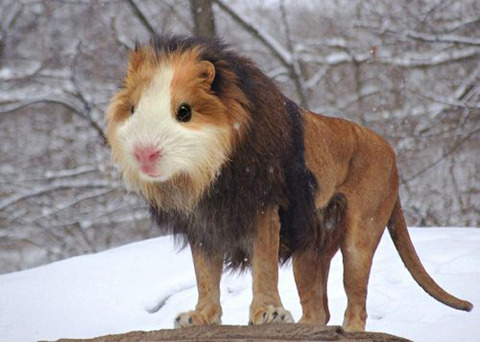 The Guinea lion