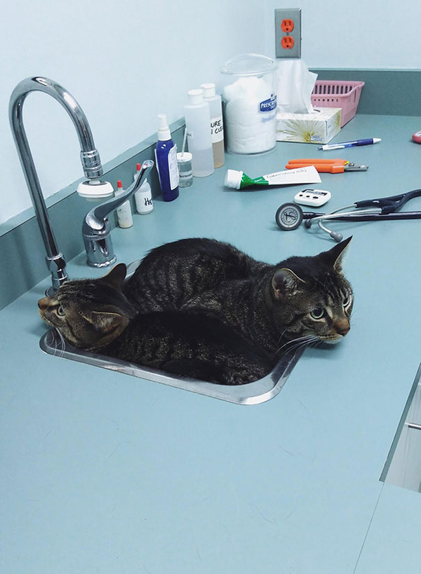 funny-scared-cats-vet-clinic-3-5bb6295a70012__605