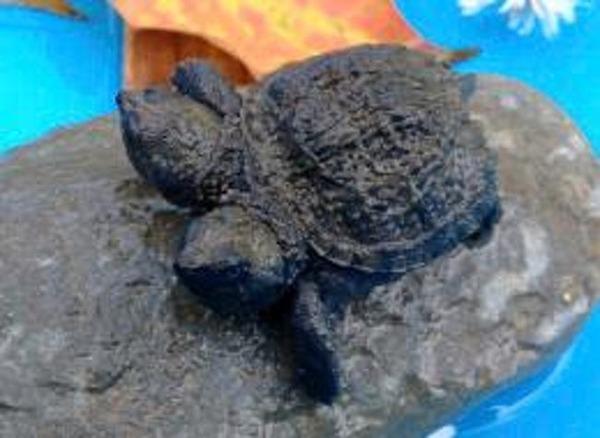 turtles-u3
