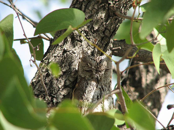 camouflaged-animals-40