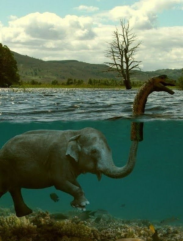 the-truth-of-nessie