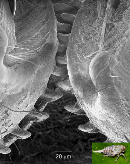 insect-has-gear-like-joints-portrait_71608_435x551
