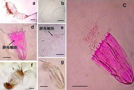 anaerobic-multicellular-organism_19026_big