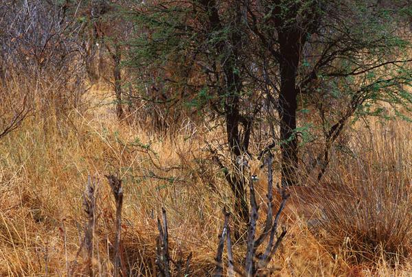 camouflaged-animals-44