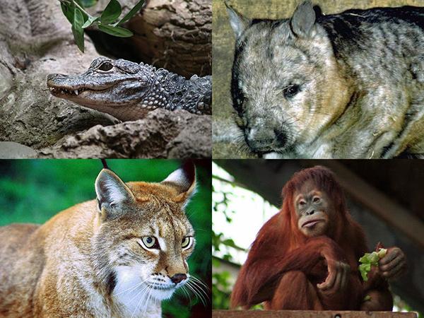 今後、100年以内に生物種の75%が消える