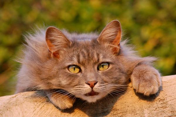cat-401124_960_720