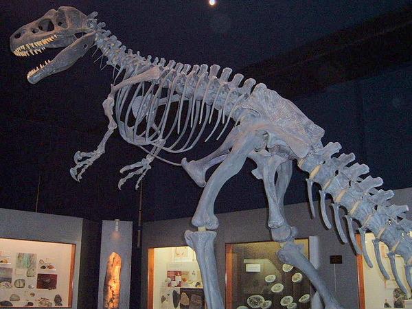 800px-Allosaurus1