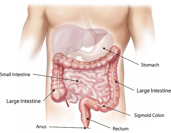 abdomen-1698565_640