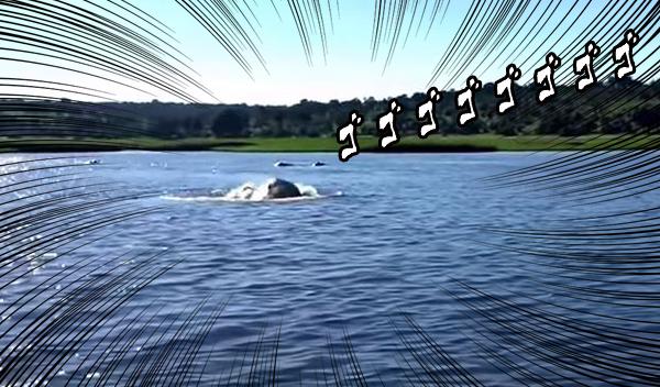 猛スピードで水中を泳ぐ