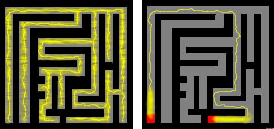 Slime_mold_solves_maze