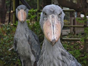 恐怖 症 鳥