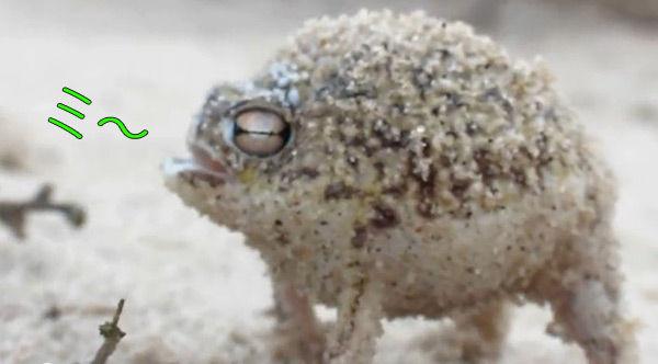 【生物】生きるために膨らむ動物たち