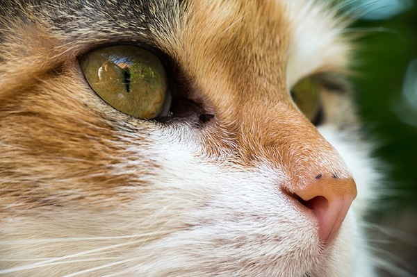 cat-1379035_640
