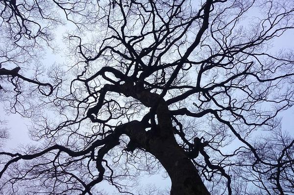 woodland-669737_640