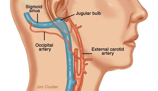 arteries-in-back-of-skull-earsite