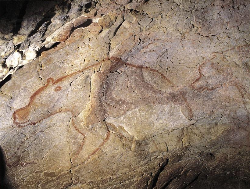 ショーヴェ洞窟の画像 p1_29
