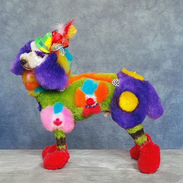 crazy-dog-grooming18