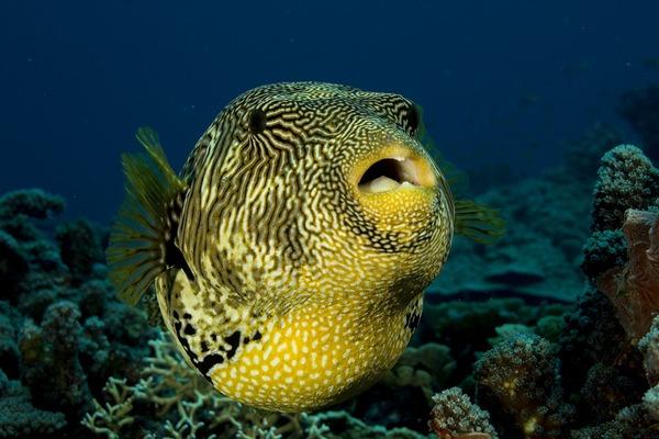 fish-1118874_960_720