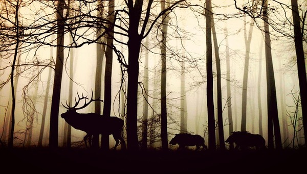 forest-1818690_640