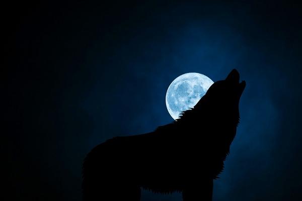 wolf-3022813_1280