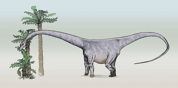 800px-Barosaurus-sketch3