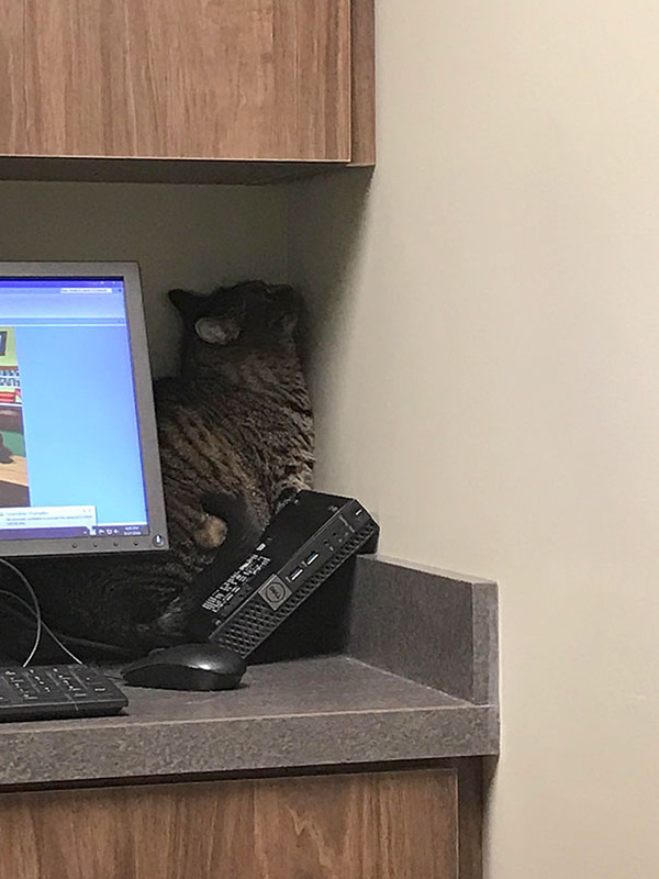 funny-scared-cats-vet-clinic-1-5ba9f312b1611__605