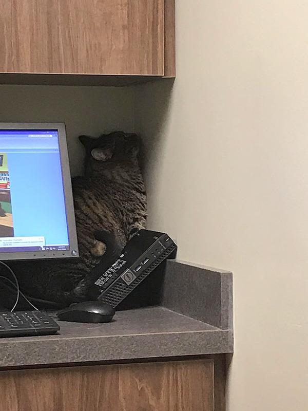 funny-scared-cats-vet-clinic-1-5ba9f312b1611__605