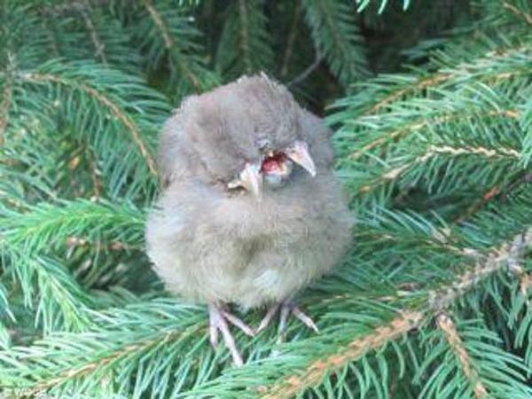 bird-freestyle-list-photo-u2