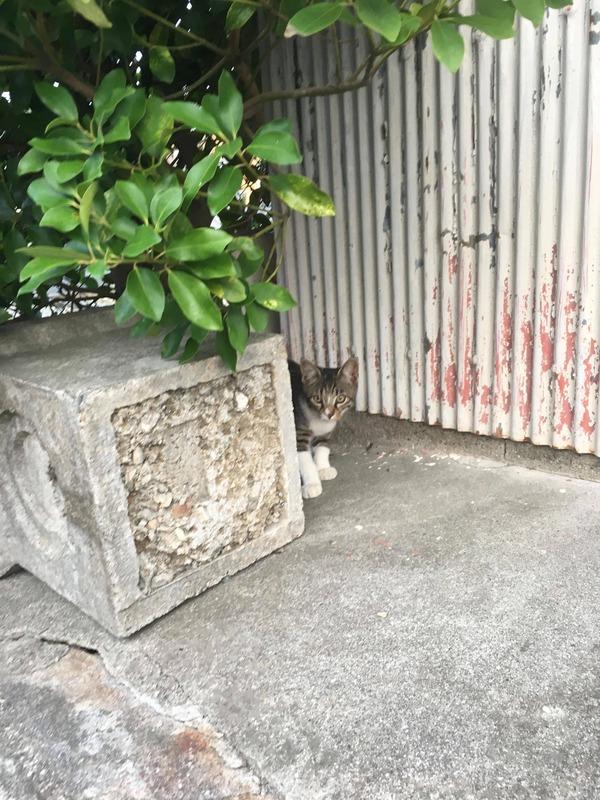 ネコの画像が自然に集まって癒されるスレ