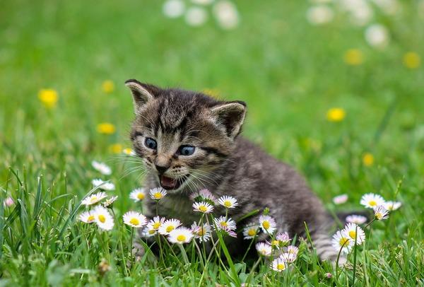 kitty-2948404_960_720
