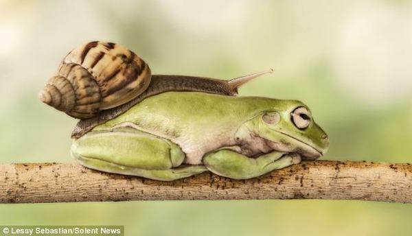 カタツムリとカエルがかわいい