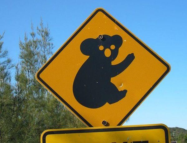 koala29