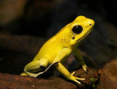 黄色いカエルがかわいい
