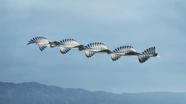 4_Ornitography_02