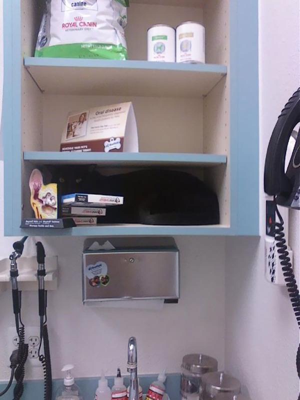 funny-scared-cats-vet-clinic-18-5bb62a6d4ca8d__605