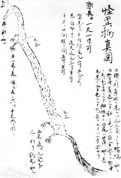 Kumaomi_Inugami