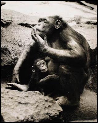 monkey-lung-cancer-awareness