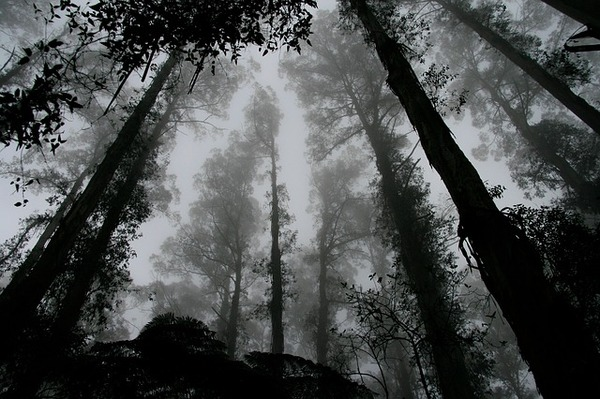 forest-1030832_640